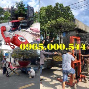 Dia Chi Ban Xe Nang Cay Canh Tai Quang Ninh